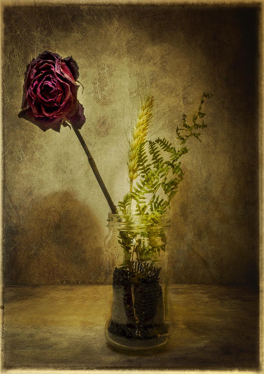 Bodegón con rosa seca